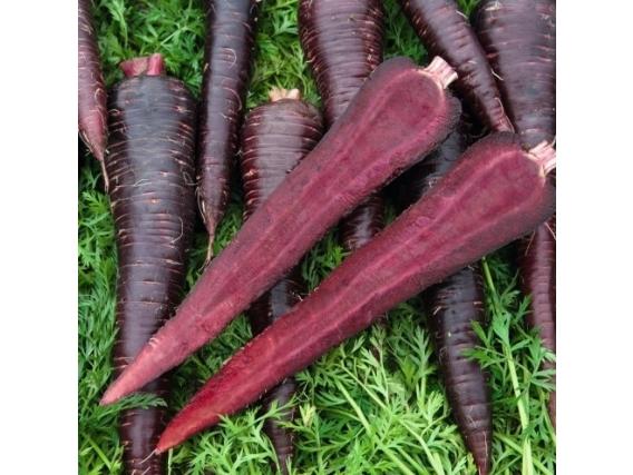 Zanahoria Colores Deep Purple F1